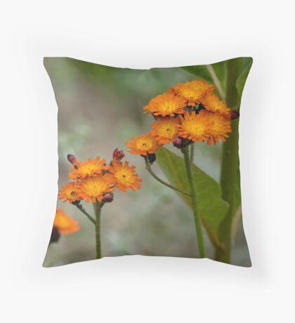 Orange Hawkweed Throw Pillow