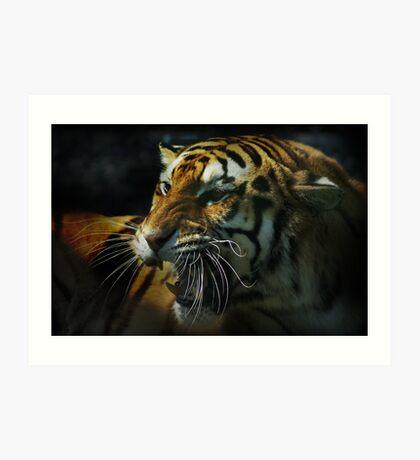 Snarling Tiger  Art Print