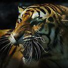 Snarling Tiger  by Michael Cummings