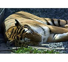 Sleeping Tiger Photographic Print