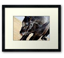 DC Police Horse Framed Print
