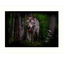 Timberwolf 1 - Photoshop Manipulation Art Print