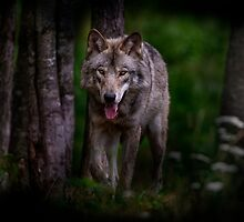 Timberwolf 1 - Photoshop Manipulation by Michael Cummings