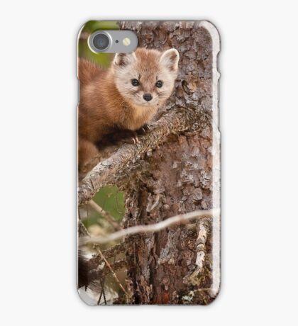 Pine Marten In Pine Tree iPhone Case/Skin