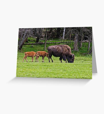 Bison And Calves Greeting Card