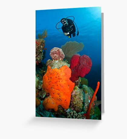 Mike investigates bright coral patch Greeting Card