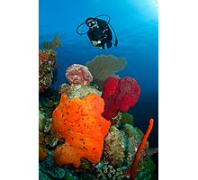 Mike investigates bright coral patch Photographic Print
