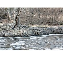 Twisted Tree Along the River Bend Photographic Print