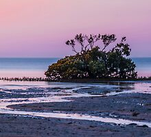 Sunset in Pink by Bette Devine