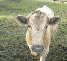Moo (Great Bowden Feb 2010) by fatchickengirl