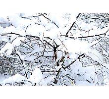 Snow Laden Photographic Print