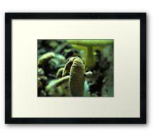 Stray mushroom Framed Print