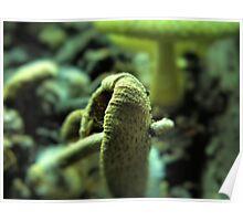 Stray mushroom Poster