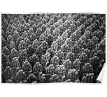 Terra-cotta Waves Poster