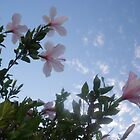 Hibiscis looking into sky by JewelsSmith
