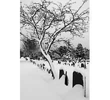 Tree in the snow Photographic Print