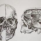 da vinci skulls by safia-akhtar