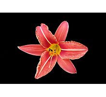 a lily in the dark Photographic Print