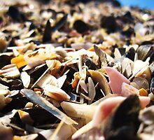 seagulls lunch by lisaellen