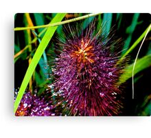 Dewdrops on Cattails Canvas Print