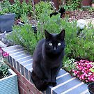 They shall not pass! (Territorially Conscious Felines) by MidnightMelody