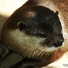 Otter by Holly Werner