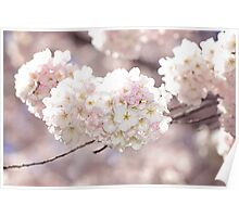 Pink and White Pompoms of Light Poster