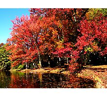 Red Trees by Lake Photographic Print