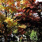 Suburban Autumn by Susan Savad