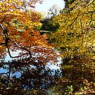 Golden Autumn Trees by Susan Savad