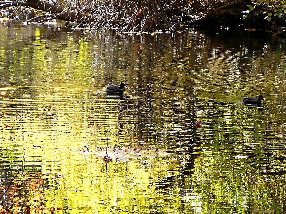 Golden Reflection by Susan Savad