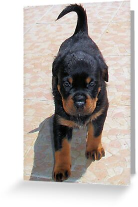 Me and My Rottweiler Shadow by taiche