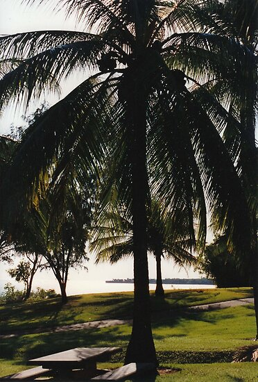 Coconut Palm by Matthew Sims