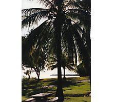 Coconut Palm Photographic Print