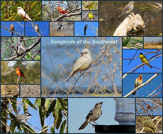Songbirds of The Southwest ~ Collage by Kimberly Chadwick
