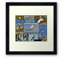 Songbirds of The Southwest ~ Collage Framed Print