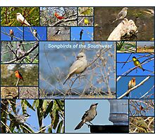 Songbirds of The Southwest ~ Collage Photographic Print