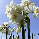 Native Flower by NancyC