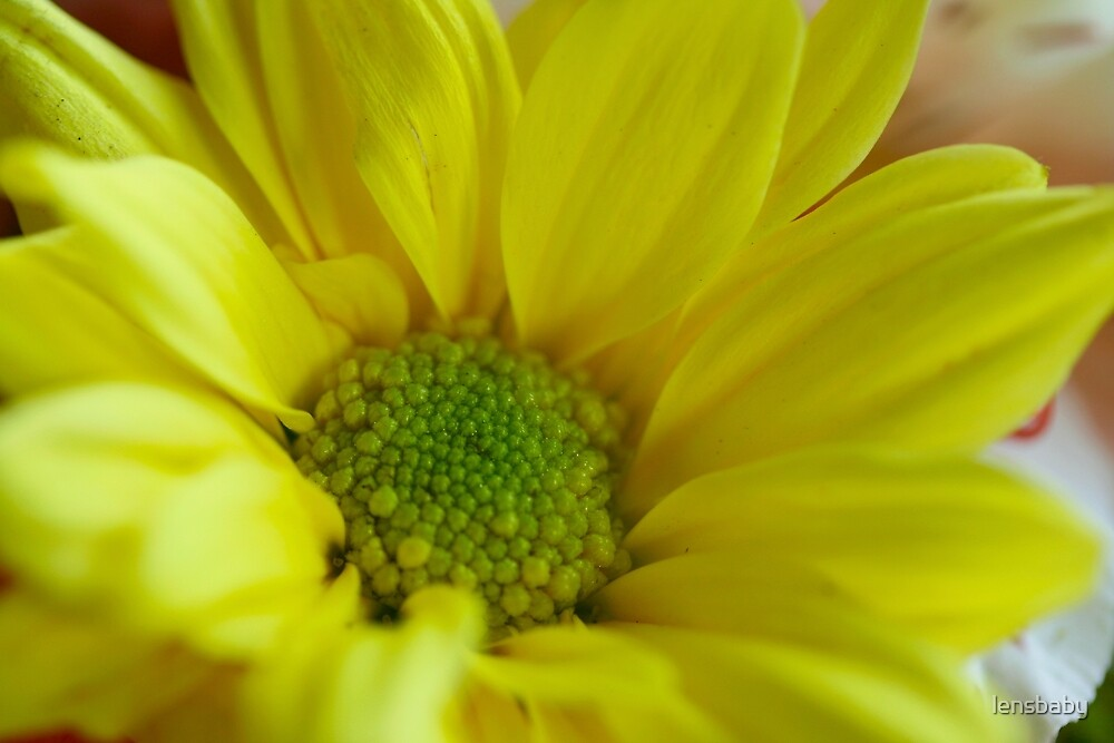 yellow inspiration by lensbaby