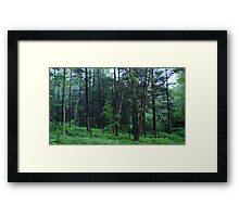 Vermont in the Springtime, United States Of America  Framed Print