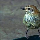 Little Feathered Friend by Meg Hart