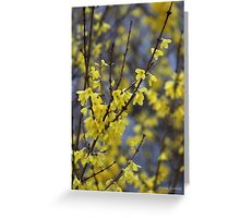 Springtime Forsythia Greeting Card