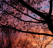 Sunset in the Maple Tree by Gilda Axelrod