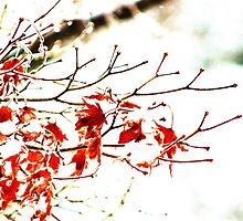 Snowy Maple Abstract by Gilda Axelrod