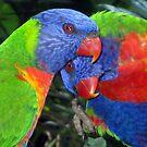 Rainbow Lorrikeets  by Barbara Cliff