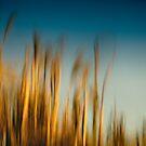 as we lie beneath the summer grass by Dorit Fuhg