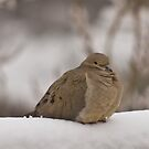 Mourning Dove in The Snow by Kgphotographics