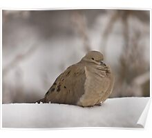 Mourning Dove in The Snow Poster