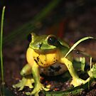 noisy frog! by Matt  Williams