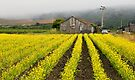 San Gregorio Farm by Zane Paxton
